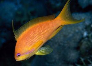 Морские рыбки для аквариума3