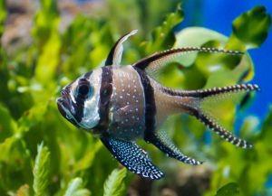 Морские рыбки для аквариума4