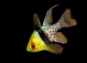 Морские рыбки для аквариума6