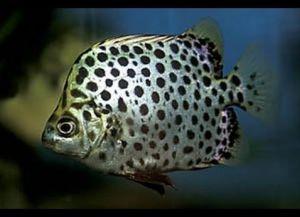 Морские рыбки для аквариума7