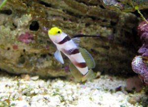 Морские рыбки для аквариума8