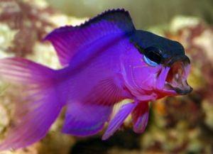 Морские рыбки для аквариума9