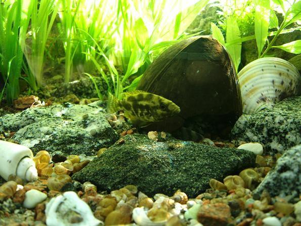 аквариум на подоконнике