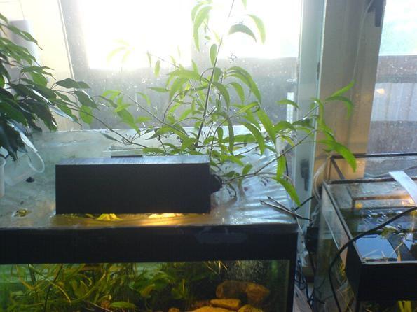 аквариум на окне