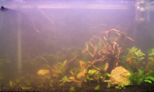 Вода в новом аквариуме мутнеет.