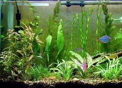 Нагреватель для аквариума1