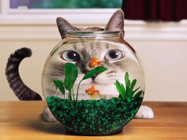 Необыйные аквариумы