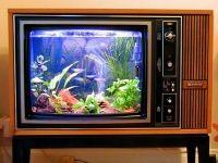 4. Необычные аквариумы