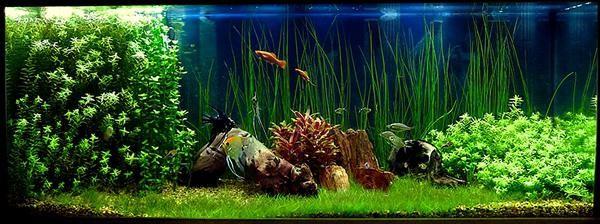 не растут растения в аквариуме