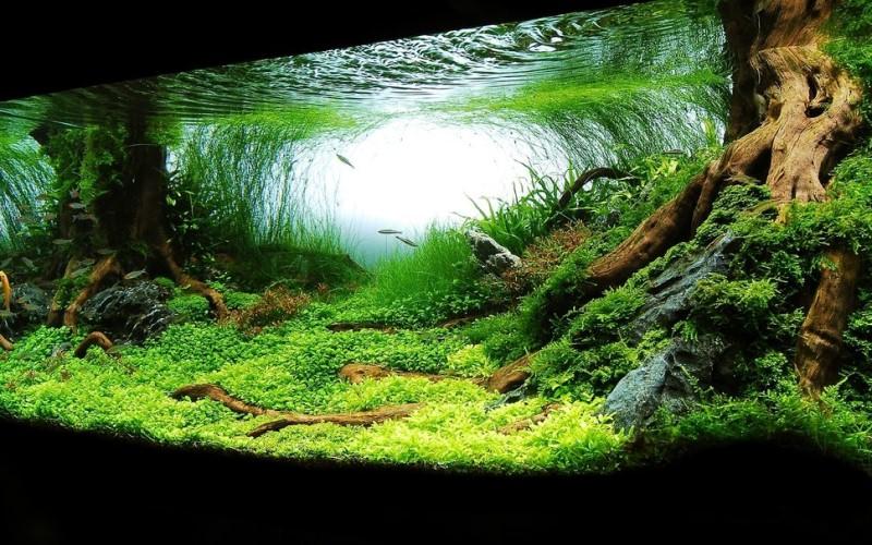 125592__aquarium_p
