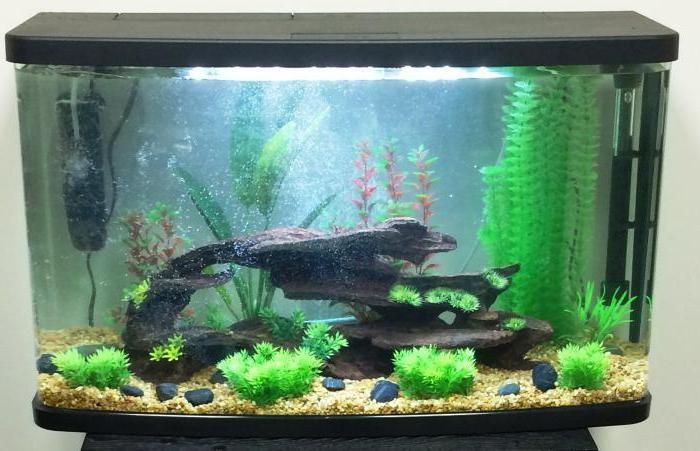 какой внешний фильтр для аквариума лучше выбрать