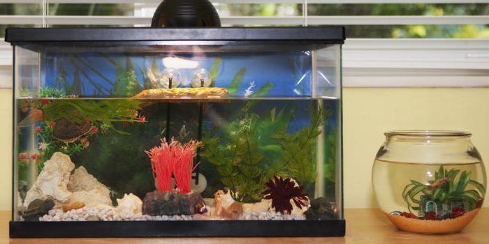 какой лучше фильтр для аквариума