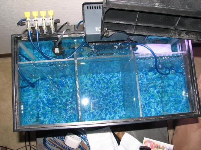какой фильтр для аквариума лучше выбрать