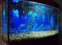 Фон для аквариума1