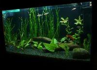 Фон для аквариума2
