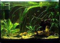Фон для аквариума4
