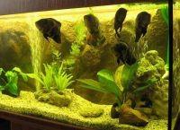 Фон для аквариума5