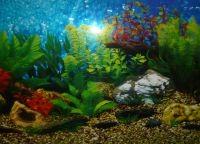Фон для аквариума6