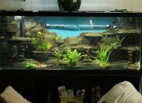 Фон для аквариума7