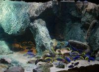 Фон для аквариума9