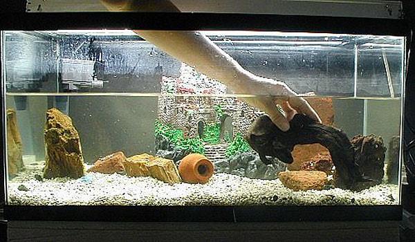 декорации в аквариуме коряга