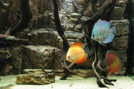 фон сделанный своими руками в аквариуме с рыбками