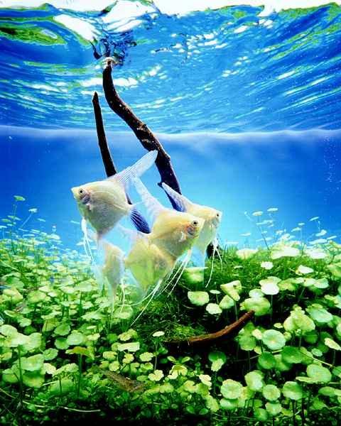Как охладить воду в аквариуме