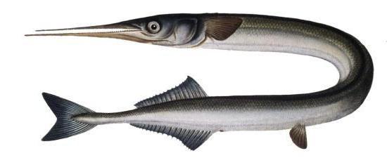 сумеречное сознание панцирных рыб