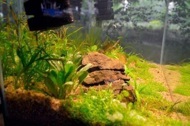 подготовка грунта для аквариума 7