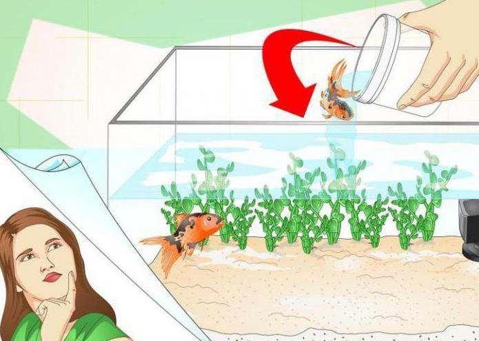 плавниковая гниль лечение в общем аквариуме левомицетином
