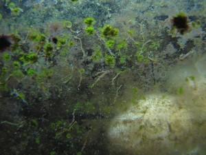 грязный аквариум