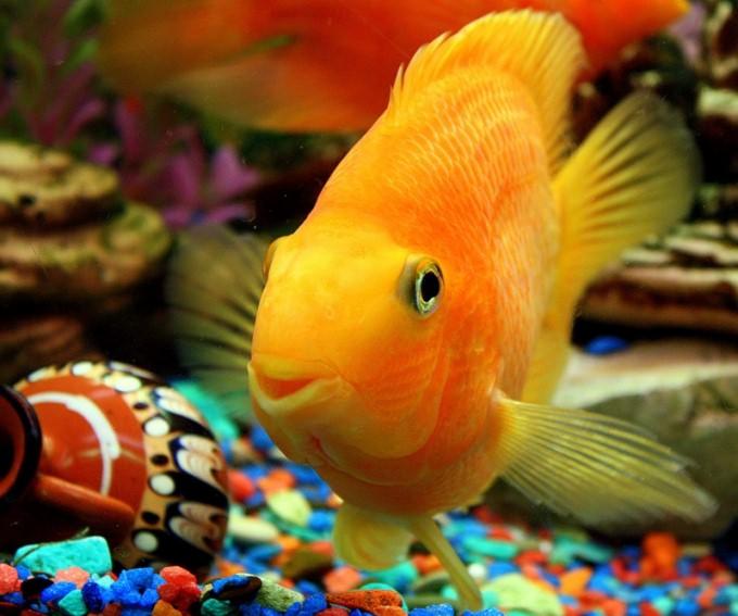 как держать дома аквариумных рыбок