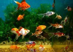 Почему рыбки дохнут в аквариуме