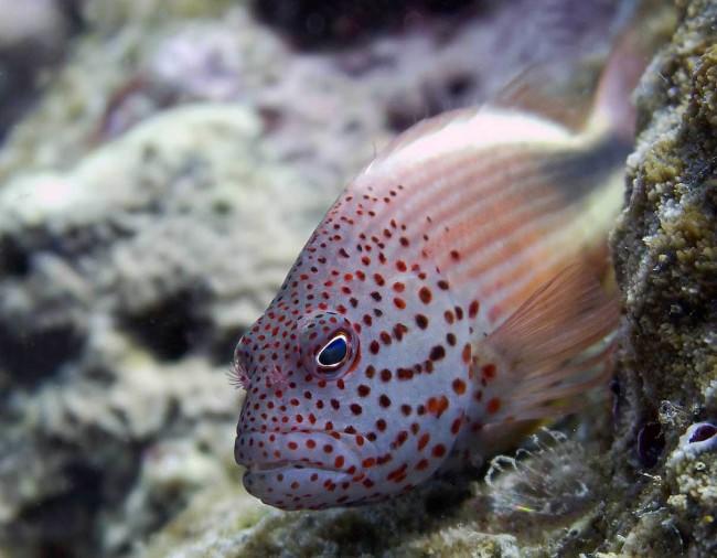 Почему рыбки лежат на дне?