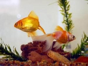 Рыбка лежит на дне
