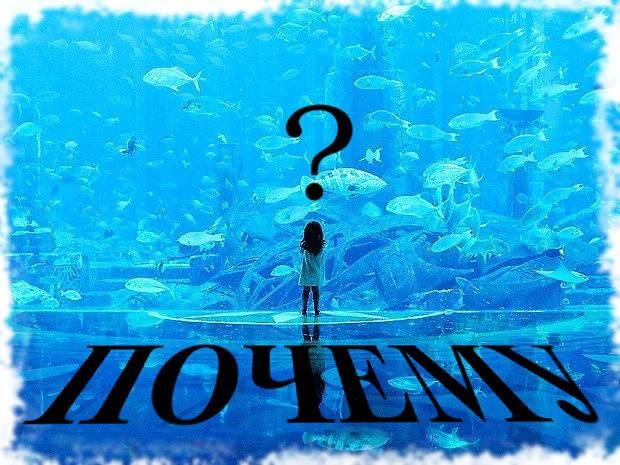 почему аквариум