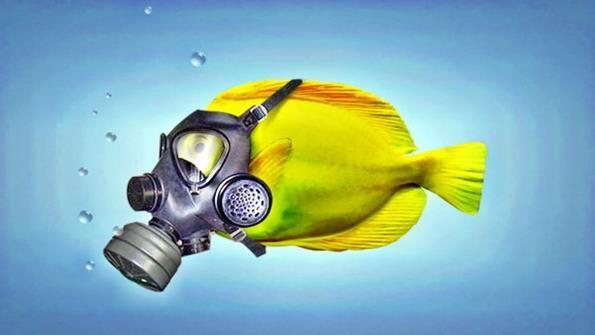 рыбка в противогазе