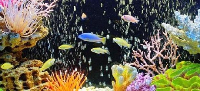 почему в аквариуме быстро мутнеет вода