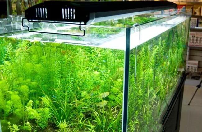 Аквариумные растения и свет.