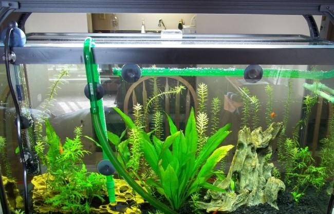 Аквариумные растения и подмена воды.
