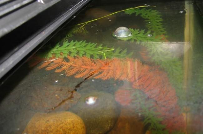 Бактериальная пленка на воде.