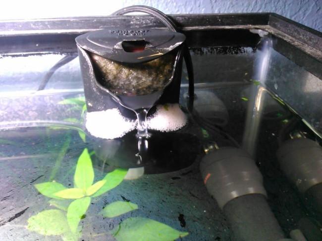 Причины возникновения пленки в аквариуме.