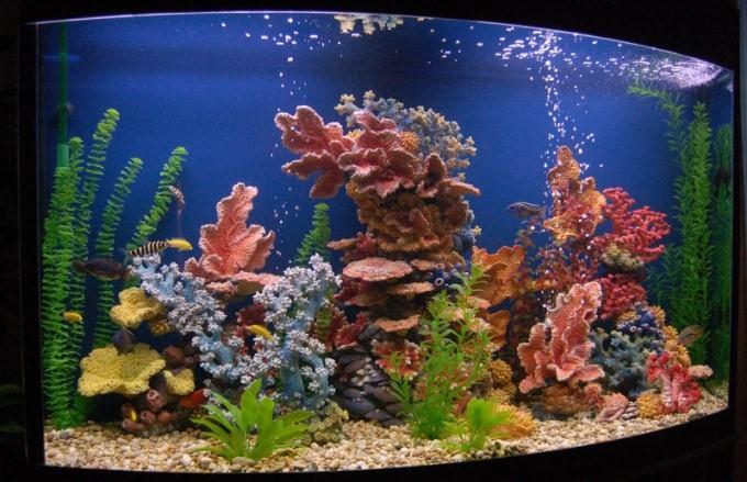 декорации в аквариуме своими руками