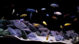 декорации в аквариуме черный фон