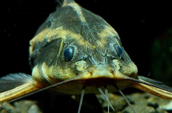 рыбы с мягким знаком