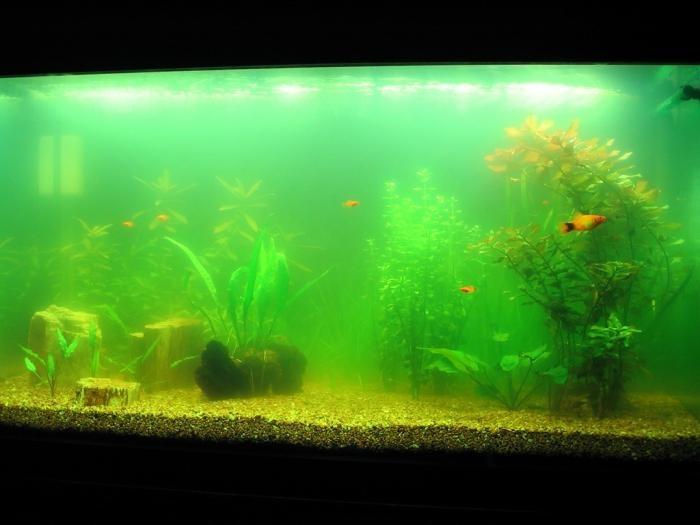 аквариумы рыбки