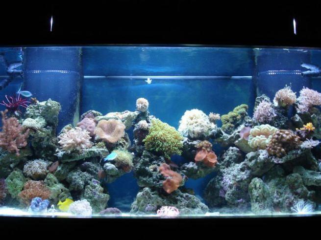 почему на стенках аквариума появляется зелень