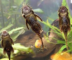 налет на стенках аквариума