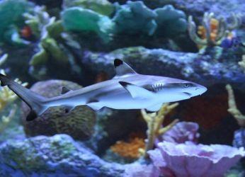 пресноводные аквариумные рыбки1