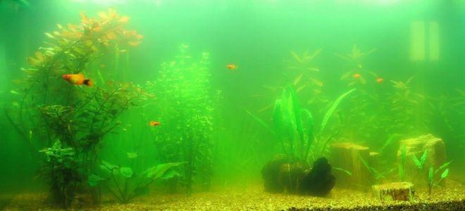 помутнела вода в аквариуме что делать